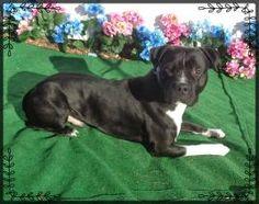 CEASAR-FRIENDS OF SHELTER ANIMALS FOR COBB COUNTY 1060 Al Bishop Drive Marietta, GA 30008 ckersey533@aol.com