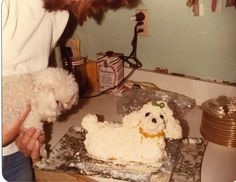 1000+ images about Ting Baker on Pinterest Garden Cakes, Snow Cake ...