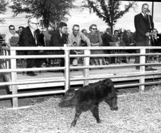 1961. 29 Octobre. Jfk at Kermac Ranch in Poteau