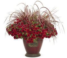 Spiller  Superbells® Pomegranate Punch  Calibrachoa hybrid  Qty:2  Thriller  Graceful Grasses® 'Fireworks'  Variegated Red Fountain Grass Pennisetum setaceum 'Rubrum'  Qty:1