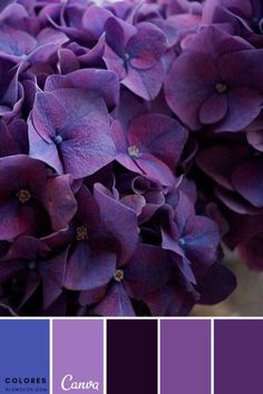 Purple Power for the study Colour Pallette, Colour Schemes, Color Combos, Purple Color Palettes, Purple Palette, Color Harmony, Color Balance, Design Seeds, Paint Colors