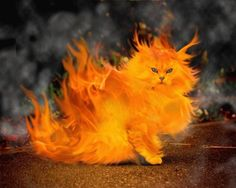 3D Fractal Art Cats | 3D Fire Cat, 3D, Abstract, Beautiful, Cat, CG, Colours, Fire, Flames ...