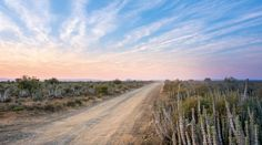 Kruger National Park's 10 best lookouts - Getaway Magazine Kruger National Park, National Parks, University Of Cape Town, Herd Of Elephants, Photo Supplies, Wild Dogs, Biomes, Travel News, National Geographic