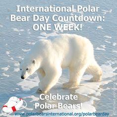 Amphibians, Mammals, Polar Bears International, Animals And Pets, Cute Animals, Polaroid, Bear Photos, Orcas, Endangered Species