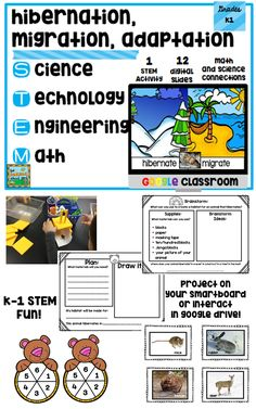 Looking for a way to use each of the four letters in your lessons? S for Science= hibernation, migration, and adaptation integrated lesson for K-1 learners...T for Technology= 12 interactive slides for Google Slides in Google drive...E for engineering a habitat for an animal to hibernate in...and M for Math= adding bears waking from hibernation using a spinner game format!