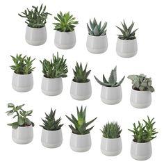 IKEA - SUCCULENT, Pflanze mit Übertopf