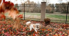 Coco loves these fall leaves everywhere!