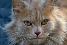 tough cats - Google Search