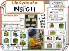 Kindergarten Schmindergarten: Insects and a Freebie