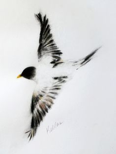 Kellas Campbell --ink, charcoal, graphite, pastel bird on heavy fine art paper.  Size A3.
