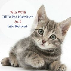 WIN Hill's Pet Nutrition Hampers For Your Kitty - http://www.liferetreat.co.za/win-hills-pet-nutrition-hampers-kitty/ Win one of two Hill's kitty hampers valued at over R250 each.  Each prize contains a #FeedMeHillsMeow bowl and a bag of Hill's, South Africa's most trusted pet food brand. Feed Me Right Meow with Hill's this July Most cat owners have accepted that their feline friend is 'the boss' and there a... Life Retreat   South Africa