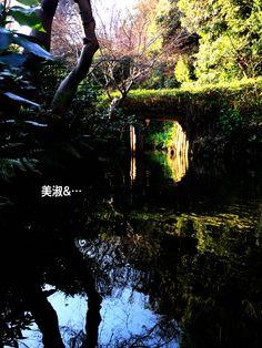 연못이란 캔버스. 池はキャンバスだった。