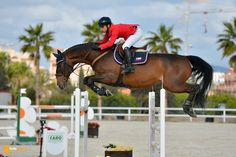 Qrack de la Love - Gold Tour 1,45 Ranking Qrack de la Love - Gold Tour 1,45 Ranking #equestrian #horse #horses #horsejump #competition #equine #chile #equitacion #horserider #showjumping #valencia #españa #spain #MediterraneanTour2015 #met2015