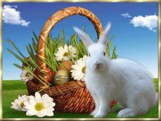 Kellemes Húsvéti ünnepeket Goats, Rabbit, Animals, Bunny, Rabbits, Animales, Animaux, Bunnies, Animal