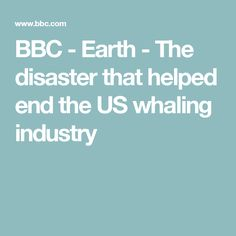 BBC - Earth -  The disaster that helped end the US whaling industry