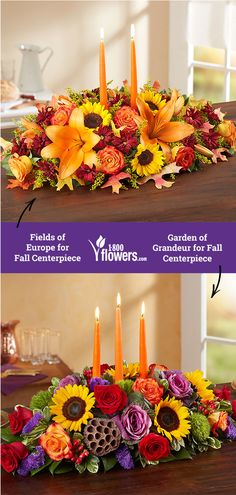113 Best Fall Flowers Plants Images Fall Flowers Fall Gifts
