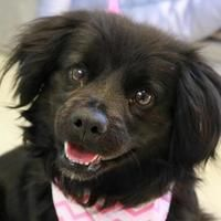27839 Best Adopt A Hound Images In 2020 Dogs Hound Breeds Red Bone