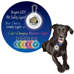 Paws for Life™ Pet Safety Light (AiO-PAWLT)  by All in One: Know where your pet is, even in the dark! Safety light clips on your dog or cat's collar. Bright light that is visible for up to 1/2 mile! White LED light or Rainbow LED light