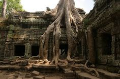 Ta Prohm - Angkor Wat, Cambodia. Part of the Angkor Wat complex, Ta Prohm has largely been left to the encroaching forest. Even now only structural repairs and path clearing takes place.