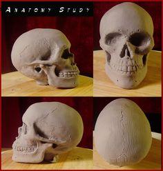 Skull Anatomy photo: Medium: Super Sculpey Clay Size: Palm size This photo was uploaded by MumboJumb0