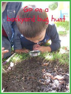 Go on a backyard bug hunt