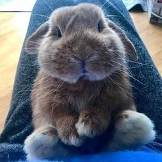 9 Sleepy Baby Animals That Will Totally Make You Need a Nap (Sorry! Cute Baby Bunnies, Cute Baby Animals, Animals And Pets, Funny Animals, Hamsters, Rabbit Breeds, Fluffy Bunny, Rabbit Hutches, Kawaii