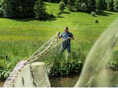 Declevas's Alpenfisch Mariazell: Bio-Forellen und Saiblinge kaufen. Outdoor Furniture, Outdoor Decor, Fish Farming, Trout, Alps, Fish, Yard Furniture