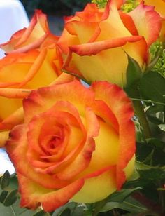 Orange and yellow roses, the most beautiful rose of all time. For happiness and passion. Love when my husband buys me these for my fall birthday. Perfect!