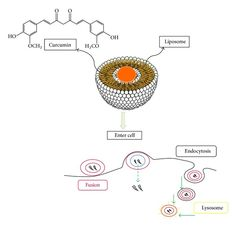 A schematic figure of how curcumin is located in liposomes and enters into cells.