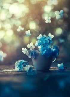 Blue flowers wallpaper Source by Blue Flower Wallpaper, Nature Wallpaper, Beautiful Wallpaper, Conceptual Photography, Nature Photography, Photography Flowers, Summer Photography, Flowers Nature, Beautiful Flowers