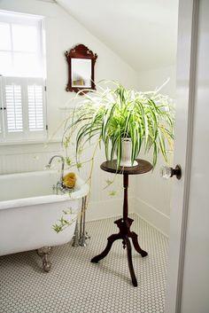 Las Mejores Plantas para el Cuarto de Baño