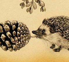 ♡☆ Hedgehog Art ☆♡