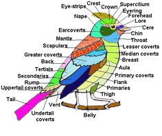 The Earthlife Web - When and How do Birds Migrate #birdwatching #birdid #birdidentification Bird Facts, Animals Information, Bird Identification, Bird Migration, Bird House Kits, Bird Aviary, Charts For Kids, How To Attract Birds, Bird Artwork