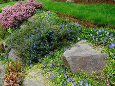 Seattle Garden Ideas: Rockery Plants - Part 1