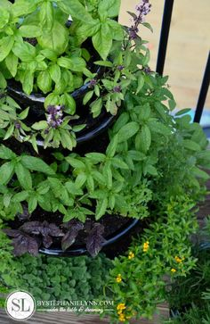 Patio Herb Garden... I wish I could have one.