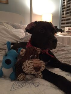 William in bed with his toys