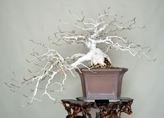 Mokuren(Mulan magnolia)   The Omiya Bonsai Art Museum, Saitama