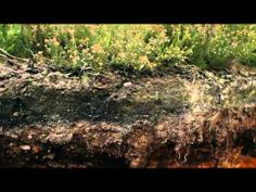 Deep Down & Dirty  The Science of Soil BBC Documentary 2014