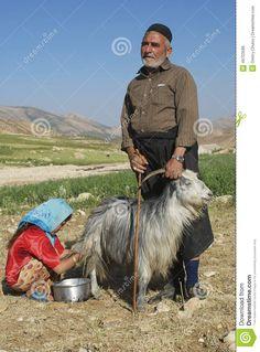 Bakhtiari People Milk Goat Circa Isfahan, Iran. Editorial Photo ...