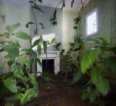 No End to Gardens, Jan Dunning - Precarious Rooms
