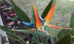 Lovely bird of paradie