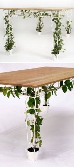 6 Ways To Include Indoor Vines In Your Interior | Keep your home office functional but brimming with plant life by including one of these desks that feature legs that encourage your plants to grow tall without taking up too much space. #gardenvineshowtogrow
