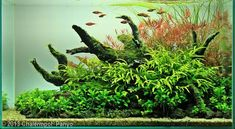 2013 AGA Aquascaping Contest - Entry #615