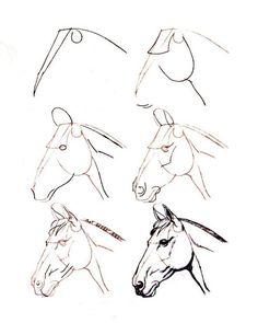 Pencil Drawings Of Animals, Art Drawings For Kids, Animal Sketches, Easy Drawings, Draw Animals, Horse Head Drawing, Horse Drawings, Art Drawings Sketches, Painted Horses