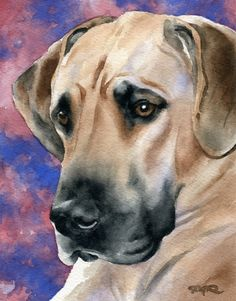 GREAT DANE Dog Watercolor Art Print Signed by by k9artgallery   WATERCOLOR
