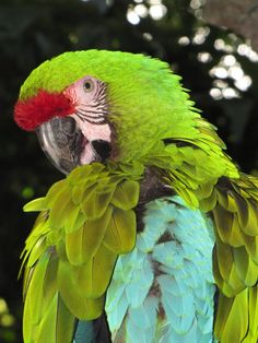 Parrot,photo by Maureen Coleman