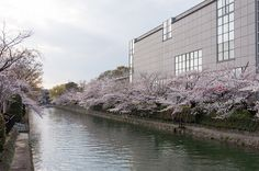 Okazaki Canal, Kyoto, Japan