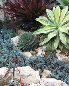 rock garden For how-tos, tips and tricks, and inspiration on all things succulents. check out our website for some helpful articles to encourage you be the best succulent gardener! Succulent Rock Garden, Succulent Landscaping, Dry Garden, Succulent Gardening, Cacti And Succulents, Planting Succulents, Garden Landscaping, Rocks Garden, Rock Garden Plants