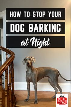 How To Get Your Dog To Stop Barking At Night Time Good Doggies Online Dog Barking At Night Dog Barking Stop Dog Barking