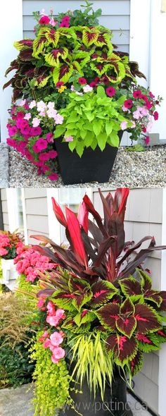 Showy, colorful and easy care shade plants and container gardens with vibrant foliage and flowers. 30 designer plant lists to create gorgeous gardens with shade loving plants ! Showy, colorful and easy care Shade Plants Container, Container Flowers, Container Gardening, Planters Shade, Gardening Vegetables, Plant Containers, Vegetables List, Best Plants For Shade, Cool Plants